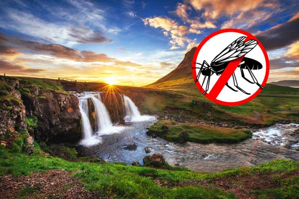 In Iceland are no mosquitos